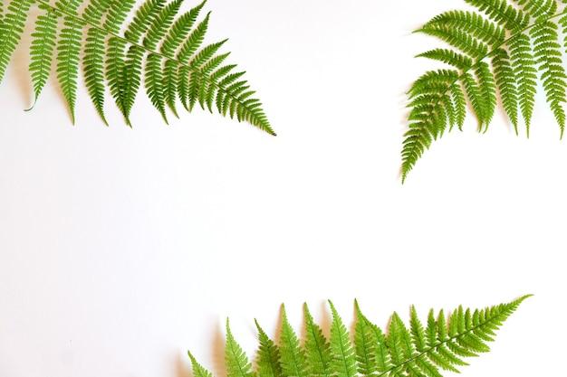흰색 바탕에 녹색 열 대 고사리 잎의 상위 뷰. 플랫 레이. 고사리 잎이 있는 최소한의 여름 개념입니다. 복사 공간이 있는 창의적인 bakdrop입니다.