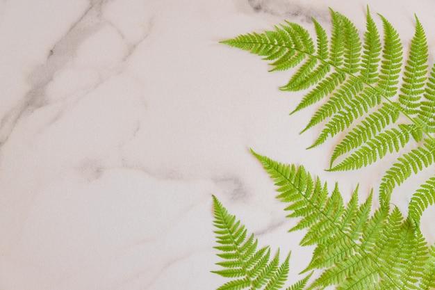 흰색 대리석 배경에 녹색 열대 고사리 잎의 최고 전망. 플랫 레이. 고사리 잎이 있는 최소한의 여름 개념입니다. 복사 공간이 있는 창의적인 bakdrop