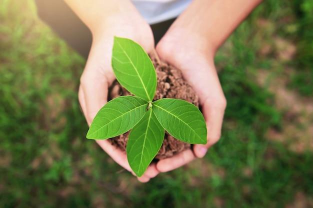 緑の草の背景が付いている土で育つ若い植物を持っている手の平面図です。環境エココンセプト