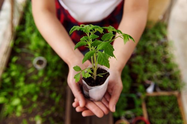 田舎の温室で育てられた土と赤ちゃん植物の苗木を持っている手の上面図。緑の成長。
