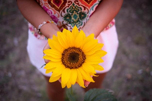 美しい新鮮な咲いた黄色のヒマワリを保持している女性旅行者の手の上面図。