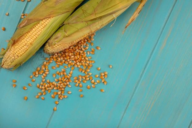コピースペースと青い木製のテーブルに分離されたトウモロコシの穀粒と健康なトウモロコシの上面図