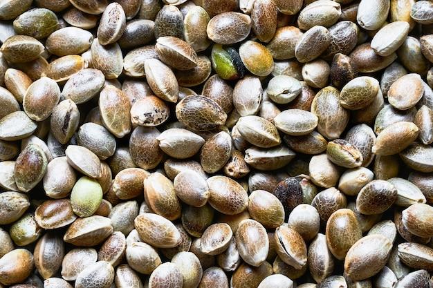 대마 씨앗, 음식 배경의 상위 뷰입니다.