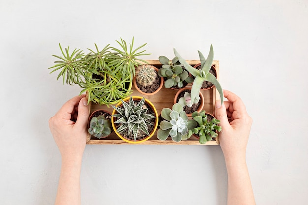 Вид сверху домашних горшечных растений. домашнее садоводство, концепция украшения интерьера. копировать пространство