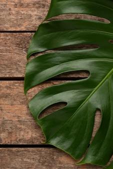 거대한 monstera 잎의 상위 뷰