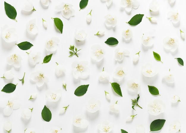 Вид сверху на цветы жасмина, бутоны и листья на белом фоне