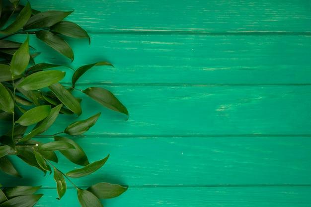 緑の表面に葉の枝のトップビュー