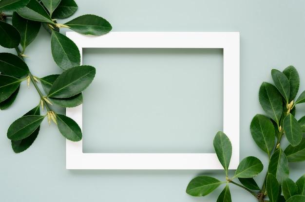 Вид сверху листьев концепции с копией пространства