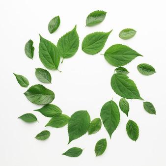 복사 공간 나뭇잎 프레임 개념의 상위 뷰