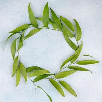 Вид сверху на листья круглой формы на белой поверхности