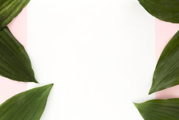 Вид сверху на листья с копией пространства
