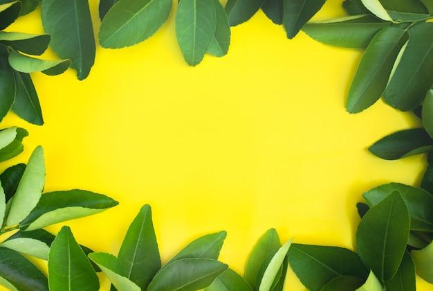 レモン、オレンジの葉のパターンの背景の上面図