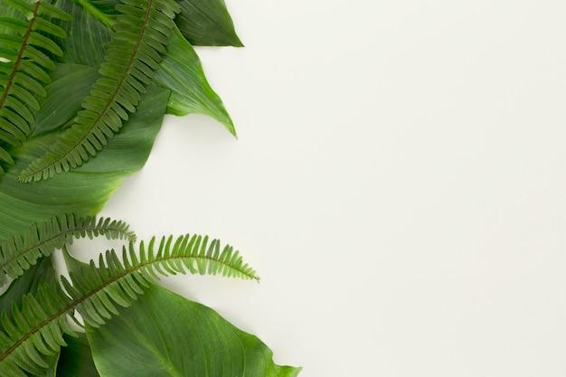 Вид сверху на много листьев и папоротников