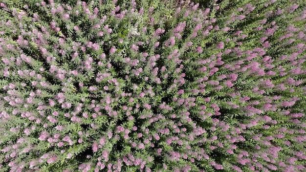많은 야생화의 상위 뷰입니다. 바람이 풀과 풀을 펄럭입니다. 향기로운 꽃이 있는 들판.