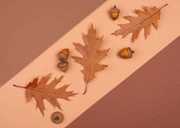 단색 잎과 도토리의 상위 뷰
