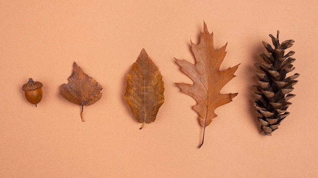 단색 잎과 콘의 상위 뷰