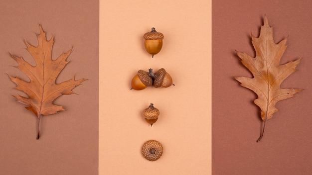 Вид сверху однотонной подборки листьев и желудей