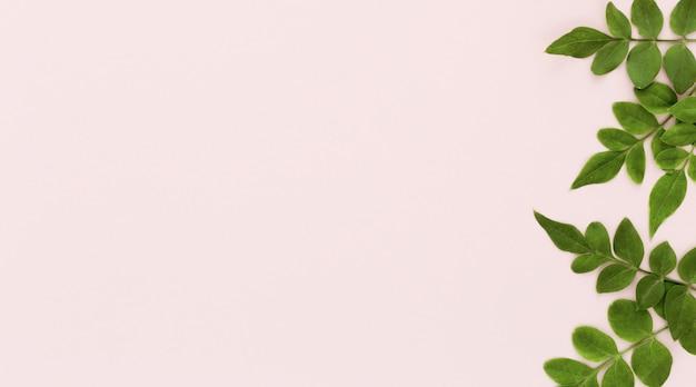 コピースペースを持つ複数の葉の平面図