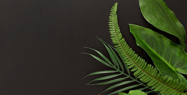 シダとコピースペースを持つ複数の葉の平面図