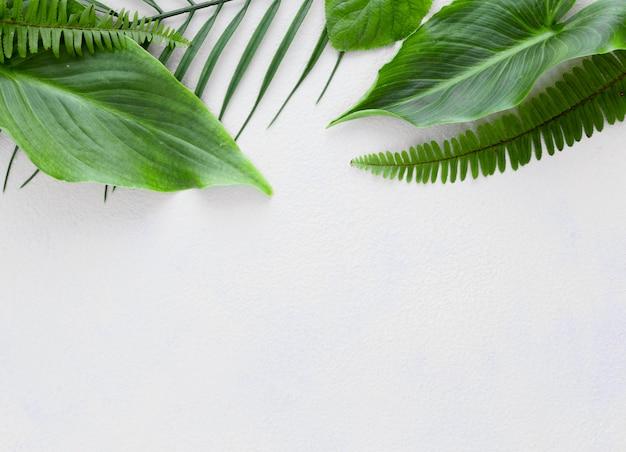 Вид сверху на несколько листьев