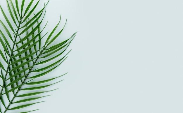 복사 공간이있는 여러 얇은 잎의 상위 뷰