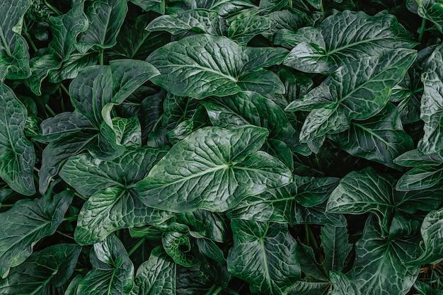 자연 녹색 잎의 평면도