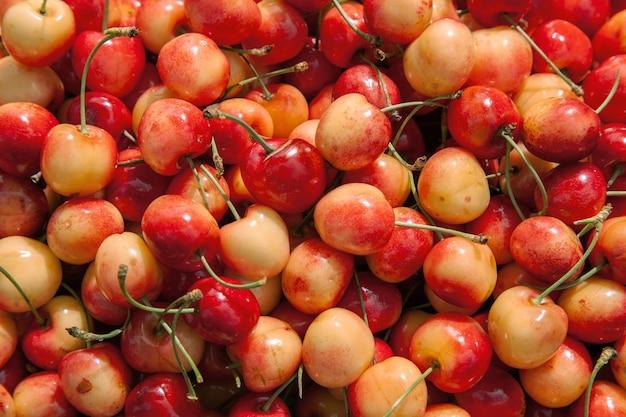 신선한 육즙이 잘 익은 농장에서 체리 베리 따기 유기농 신선한 체리 열매의 상위 뷰