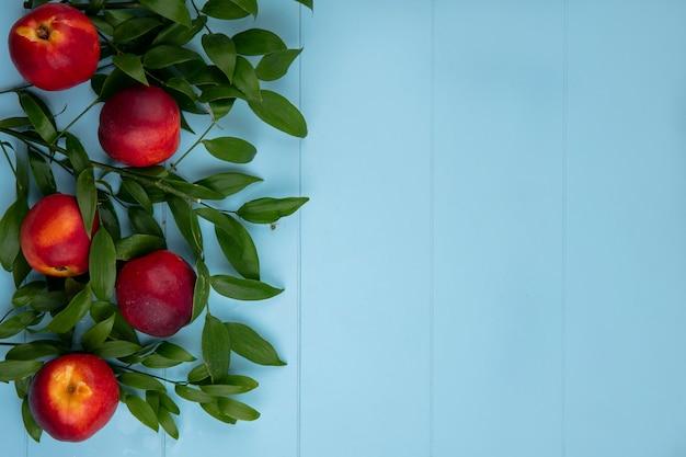 Вид сверху персиков с ветвями листьев на голубой поверхности