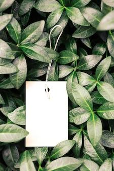 Вид сверху рамы из листьев барвинка и белой изолированной бирки одежды с копией пространства для логотипа натурального цвета ...