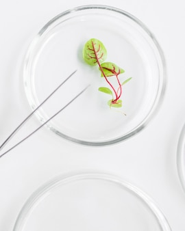 생명 공학 실험실에서 식물 배양 접시의 상위 뷰
