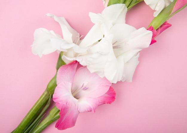 Вид сверху розового и белого цвета гладиолусов, изолированных на розовом фоне