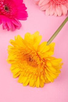 Вид сверху розового и желтого цвета цветов герберы, изолированных на розовом фоне