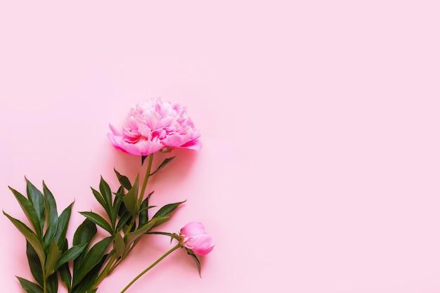 Вид сверху розовых цветов пиона с копией пространства. место для текста.