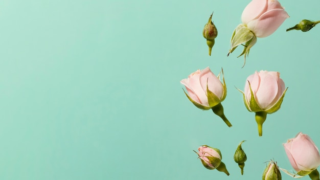 Вид сверху розовых весенних роз с копией пространства