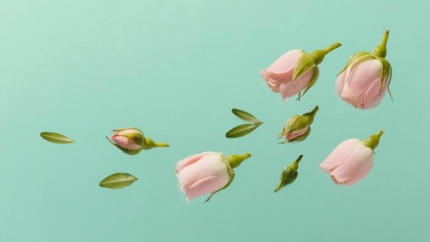 ピンクの春のバラの上面図
