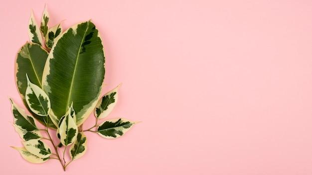 Вид сверху на листья растений с веткой и копией пространства