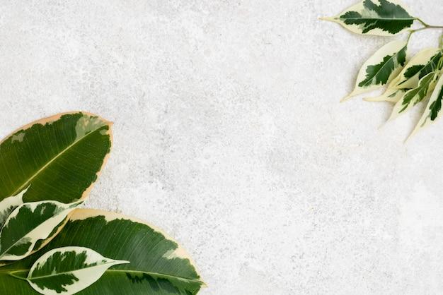 Вид сверху на листья растений с копией пространства