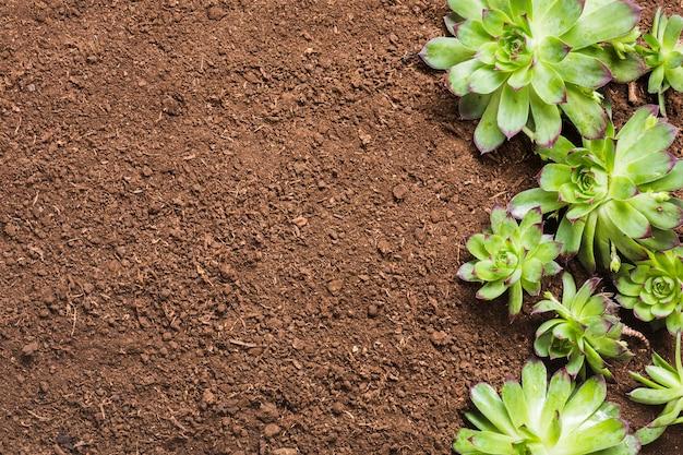 지상에 식물의 평면도