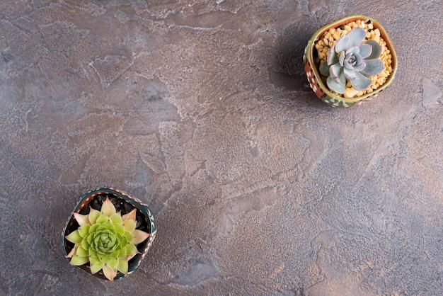 Вид сверху растений с копией пространства