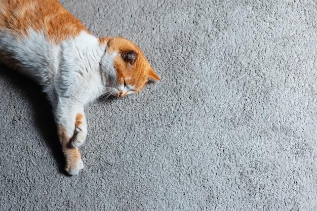 床に横たわっている赤白猫の上面図。スペースの背景をコピーします。