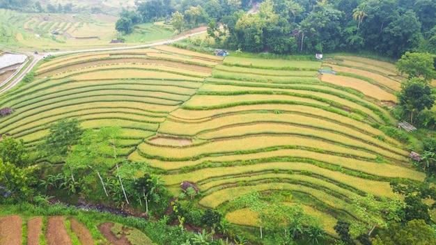 Mangunan bantul 족자카르타의 계단식 논