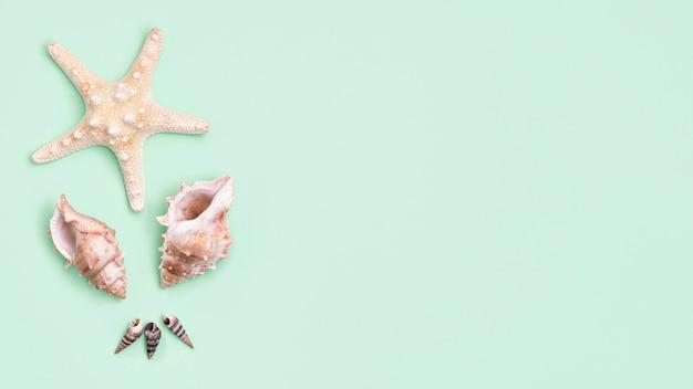 コピースペースとヒトデと貝殻のトップビュー