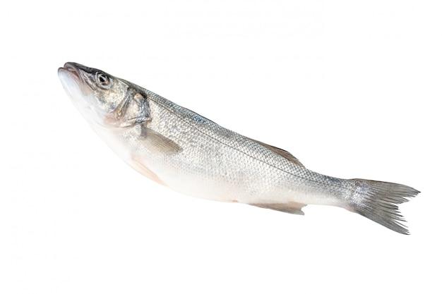 고립 된 농 어 물고기의 상위 뷰