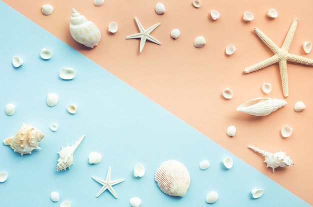 色の背景にコピースペースで設定された貝殻の上面図