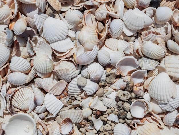 晴れた日の砂の上の貝殻の上面図