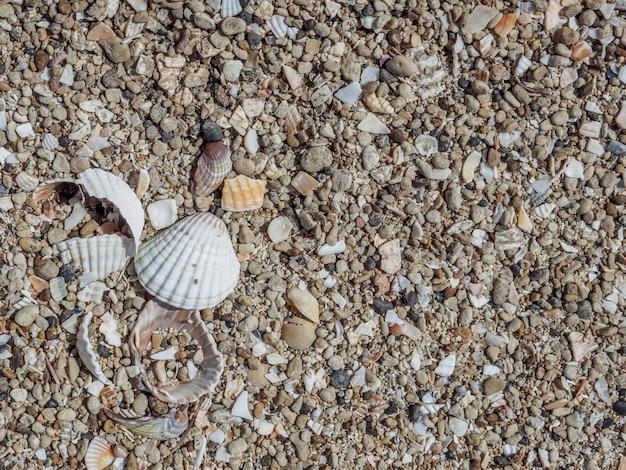 晴れた日の砂の上の貝殻の上面図。海洋自然の自然の背景。海の休暇の概念。スペースをコピーします。フラットレイ。