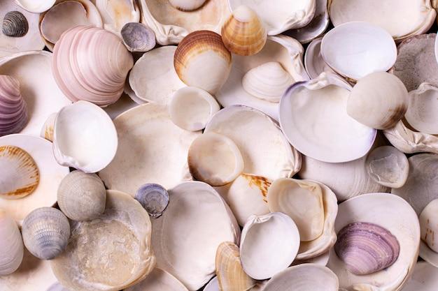 貝殻の上面図