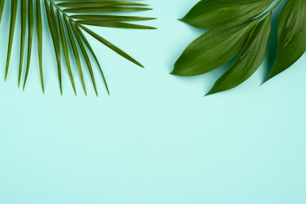 Вид сверху на выбор листьев растений с копией пространства