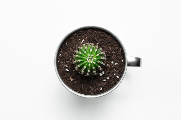 Вид сверху небольшого зеленого кактуса в стальной кружке на белом.