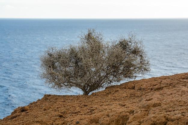 바다 배경에 작은 식물 냄비의 상위 뷰